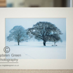 Black and White Print of Camperdown Park Dundee for sale