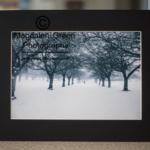 Black and White Print of Dawson Park Trees - Winter Scene Dundee for sale